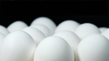 UAE bans eggs, birds from Mexico district following bird flu outbreak