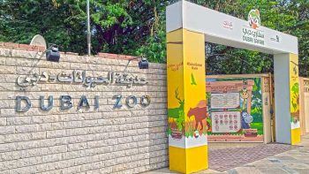 After 50 years, Dubai Zoo is closing down in November