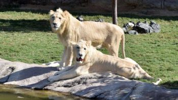 UAE approves new rules on owning exotic animals