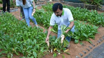Urban farm thrives at hotel in Ajman