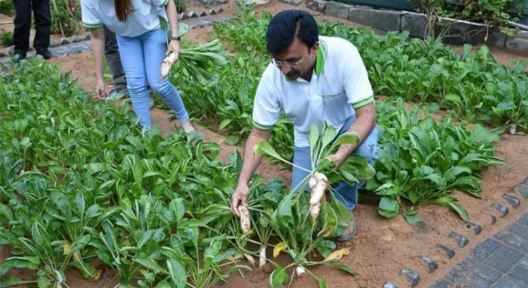 Urban farm thrives at hotel in Ajman