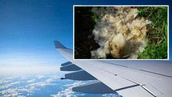 'Extra-terrestrial' object that fell from sky may be 'airline poo'