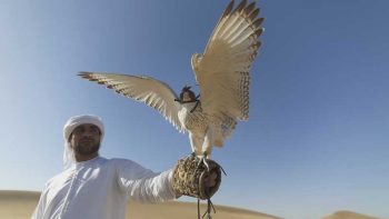 More than 350 exhibitors to attend Saudi Falcons and Hunting Expo
