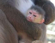 Help Emirates Park Zoo & Resort name newest resident