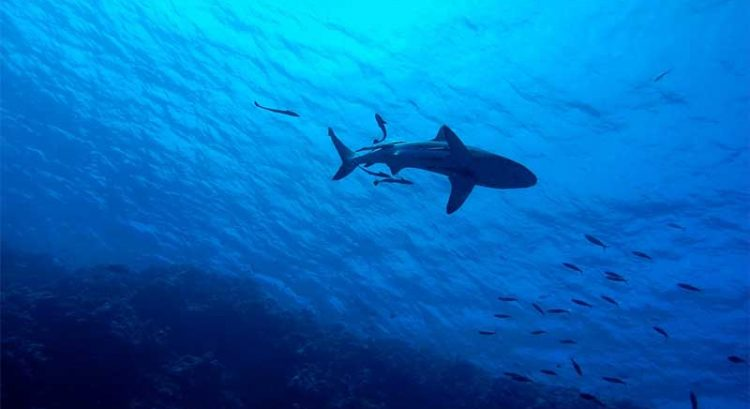 Shark fishing temporarily banned in UAE