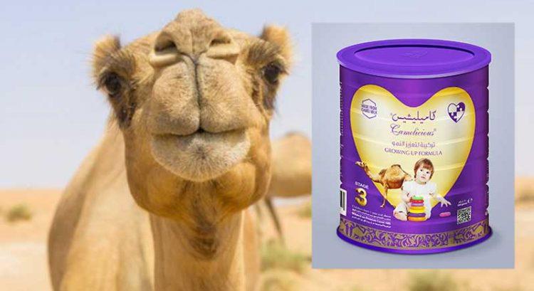 Soon, camel milk for babies in UAE