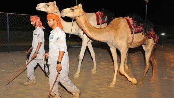New Abu Dhabi desert patrol runs on four legs