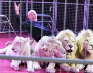 Dubai circus shut down following backlash over lions