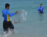 15 baby sharks released in Dubai ocean