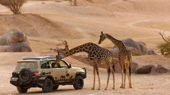 Al Ain Zoo reopens as UAE weather cools