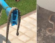 Snakes, mosquitos plague luxury Dubai community