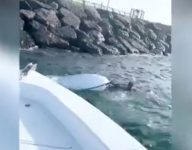 Watch: Man rescued after jet ski crashes in Dubai