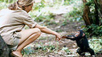 Jane Goodall to speak at Emirates Airline Festival of Literature 2020