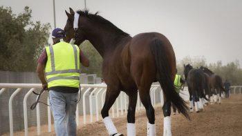 Dubai Godolphin team on track for $20 million Saudi Cup