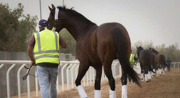 Dubai Godolphin team on track for $20 million Saudi Cup