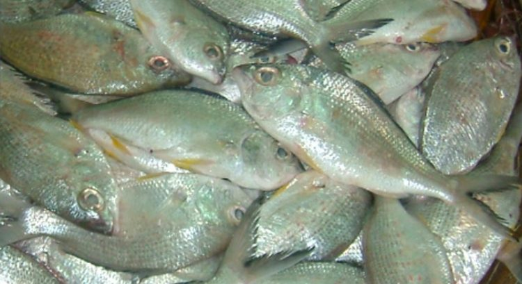 UAE lifts ban on catching, selling badah fish from April 5