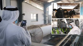 Al Rawabi Farm: Sneak peek of UAE's biggest milk producer