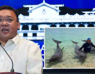 Harry Roque apologises for viral dolphin photos