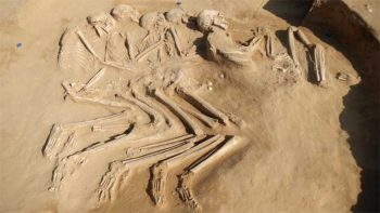 5 skeletons from 6000 BC discovered in UAE