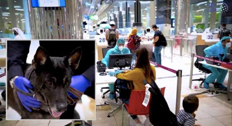 UAE is world first to use K9 dogs for Covid-19 detection