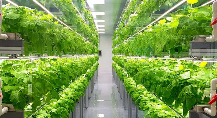 World's largest indoor farm to be built in Abu Dhabi