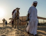 World's most beautiful camels to get Dh110 million total prize