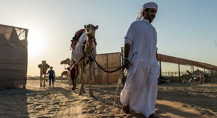 How to train your camel: UAE training program opens for expats, Emiratis