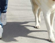 Dubai dog owner to pay Dh15,000 after pet attacks girl