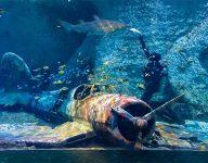 Abu Dhabi builds largest aquarium in Middle East